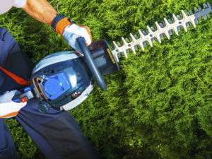 hedge trimming and cutting